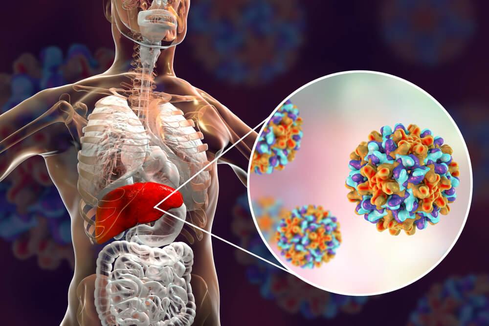 Ilustração que mostra todos os órgãios do corpo humano em branco. O fígado que é o órgão mais atingido pelos sintomas de hepatite b está destacado de vermelho. Aparece uma espécie de lupa que mostra a ilustração dos vírus de forma colorida.
