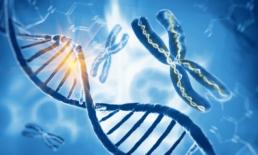 Ilustração que mostra uma molécula de DNA e um cromossomo livre, representando o post sobre a Síndrome de Patau.